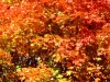 fall_colors-1